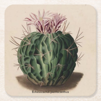 Posavasos Cuadrado De Papel Práctico de costa del cactus del pentacanthus de