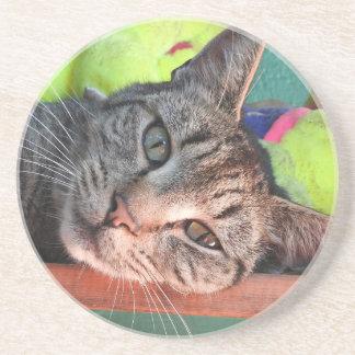 Posavasos De Arenisca Amor del gato de Tabby