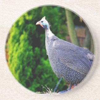 Posavasos De Arenisca Aves de Guinea con casco azules que se colocan en