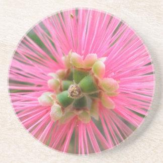Posavasos De Arenisca Flor rosada del árbol de goma