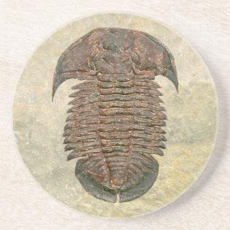 Posavasos De Arenisca Fósil Trilobite de Yuepingia