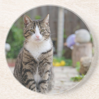 Posavasos De Arenisca gato
