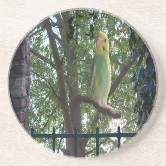 Posavasos De Arenisca Parakeet