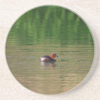 Posavasos De Arenisca Pato del pequeño grebe en plumaje de la cría