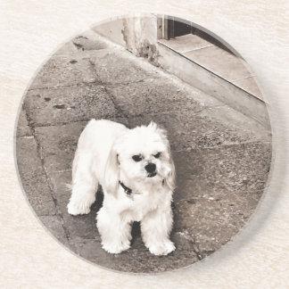 Posavasos De Arenisca perro malhumorado fullsizeoutput_c75