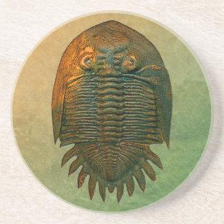 Posavasos De Arenisca Práctico de costa fósil de Neometacanthus
