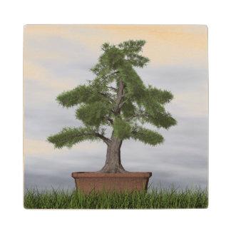 Posavasos De Madera Bonsais del árbol del enebro del templo - 3D