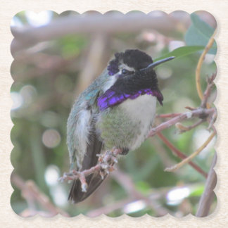 Posavasos De Papel El colibrí de la costa