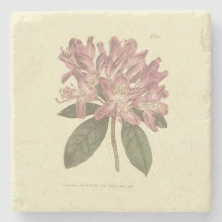 Posavasos De Piedra Ejemplo púrpura del rododendro