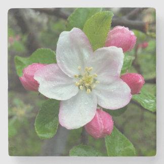 Posavasos De Piedra Gotas de lluvia en poca flor