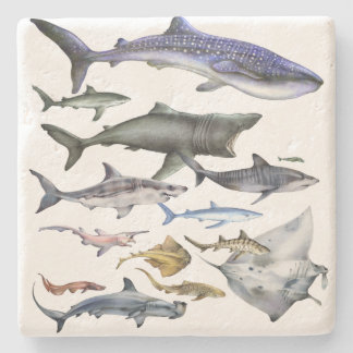 Posavasos De Piedra Tiburones del mundo