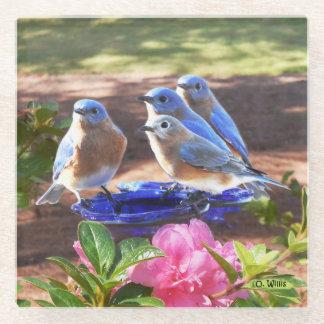 Posavasos De Vidrio 050 de los Bluebirds práctico de costa del vidrio