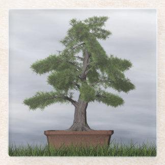 Posavasos De Vidrio Bonsais del árbol del enebro del templo - 3D