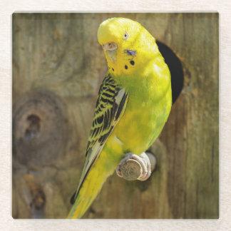 Posavasos De Vidrio Budgie amarillo