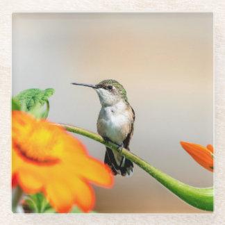 Posavasos De Vidrio Colibrí en una planta floreciente
