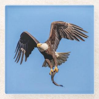 Posavasos De Vidrio Eagle calvo con un pescado