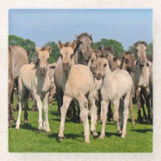 Posavasos De Vidrio La manada salvaje Grullo coloreó la foto de los