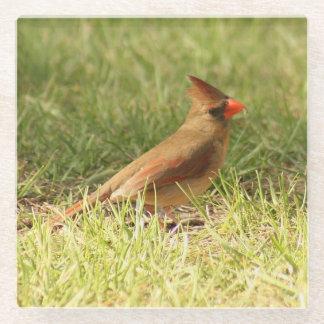 Posavasos De Vidrio Práctico de costa cardinal femenino del vidrio de