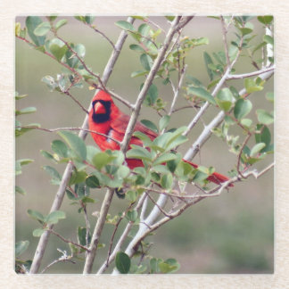 Posavasos De Vidrio Práctico de costa cardinal masculino del vidrio de