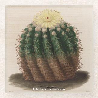Posavasos De Vidrio Práctico de costa del cactus del erinaceus de