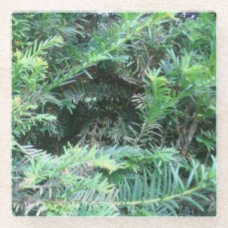 Posavasos De Vidrio Práctico de costa del tejo del bosque de Sherwood