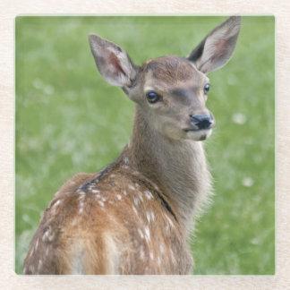 Posavasos De Vidrio Práctico de costa del vidrio de Bambi