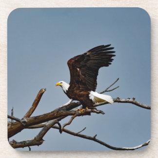 Posavasos Eagle calvo se va volando para arriba