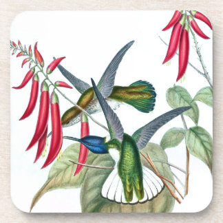 Posavasos El animal de la fauna de los pájaros del colibrí