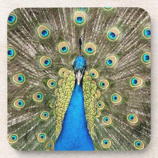 Posavasos El pavo real de Pedro empluma el Peafowl salvaje