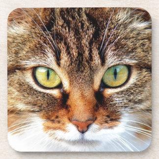 Posavasos Gato
