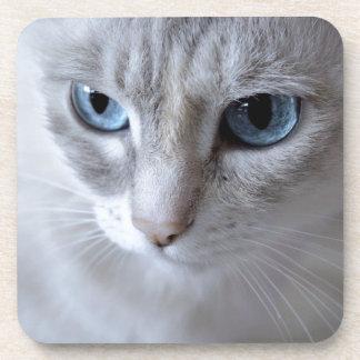 Posavasos Gato de Kisa de los ojos azules
