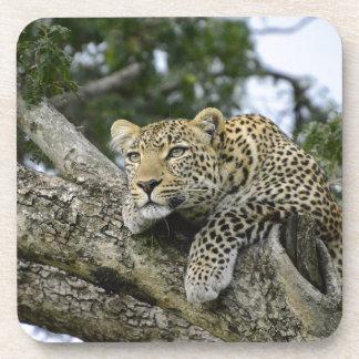 Posavasos Gato salvaje animal del safari de África del árbol