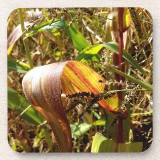 Posavasos Hojas otoñales del maíz