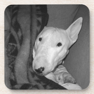 Posavasos Inglés bull terrier Snuggled debajo de una manta -
