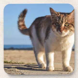 Posavasos La cara joven linda animal perdida del gato
