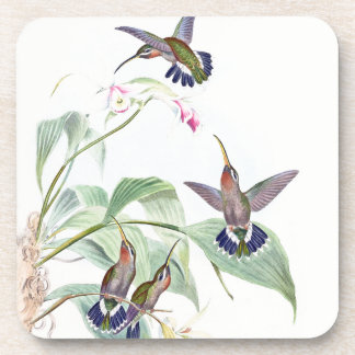 Posavasos La orquídea de la fauna de los pájaros del colibrí