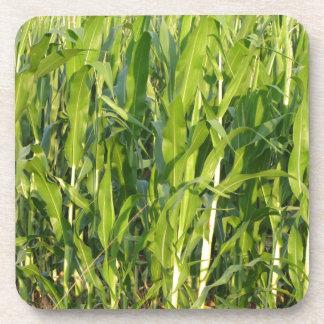 Posavasos Las plantas de maíz verde están creciendo en