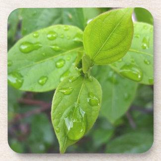 Posavasos Lluvia sobre las hojas