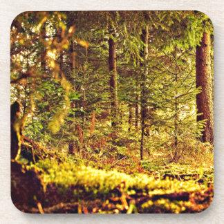 Posavasos Luz en el bosque
