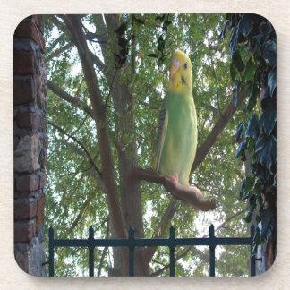 Posavasos Parakeet