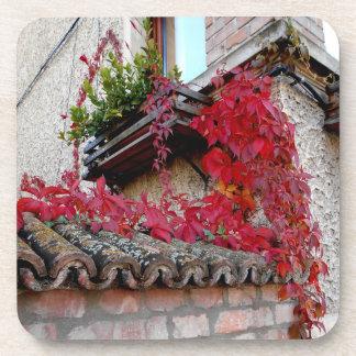 Posavasos Planta corriente roja y la ventana