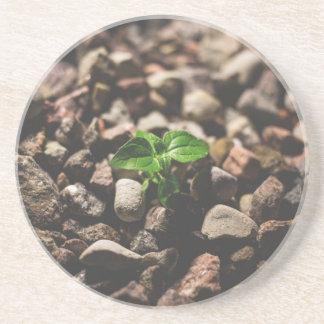 Posavasos Planta frondosa verde que comienza a crecer en los