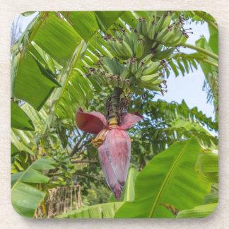 Posavasos Plantación de plátano en la isla pálida de Sok Kwu