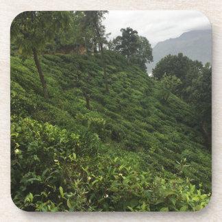 Posavasos Plantación de té