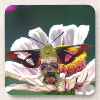 Posavasos Polilla de colibrí