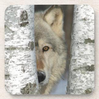 Posavasos prácticos de costa con la foto del lobo gris en