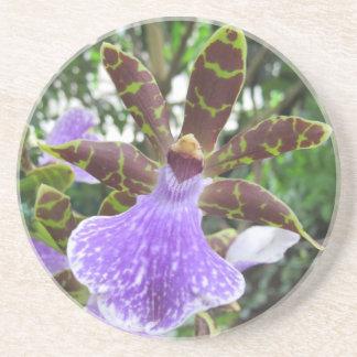 Posavasos Prácticos de costa de la orquídea de Zygopetalum