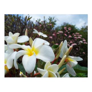 Postal 1 de los Plumerias de Waikoloa
