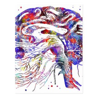 Postal 4522bBrain nervios craneales, nervios craneales