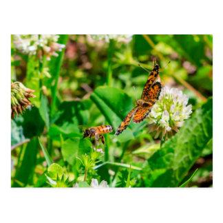 Postal Abeja y mariposa